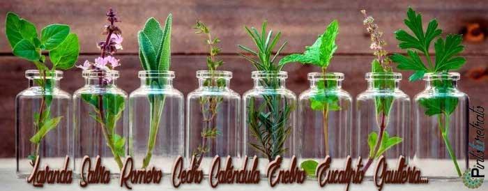 distintos aceites esenciales en frascos