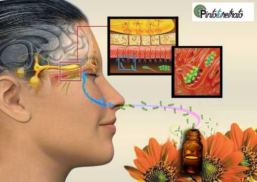 como funciona la aromaterapia
