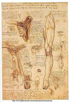 estudio de anatomia de leonardo DavincI